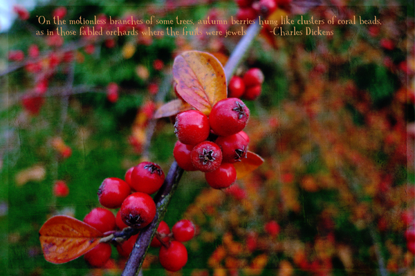 Autumn-berries